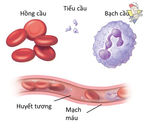 làm sao để biết mình nhóm máu nào