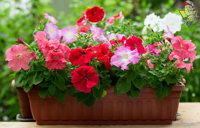 hoa đẹp mùa thu có gì