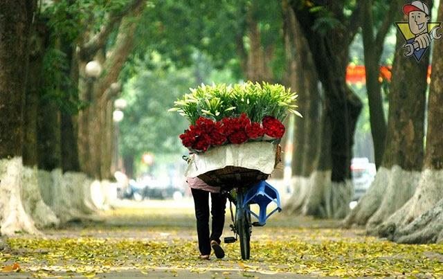 mùa thu có hoa gì