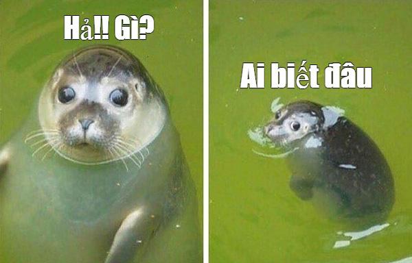 Meme chú hải cẩu giải trí