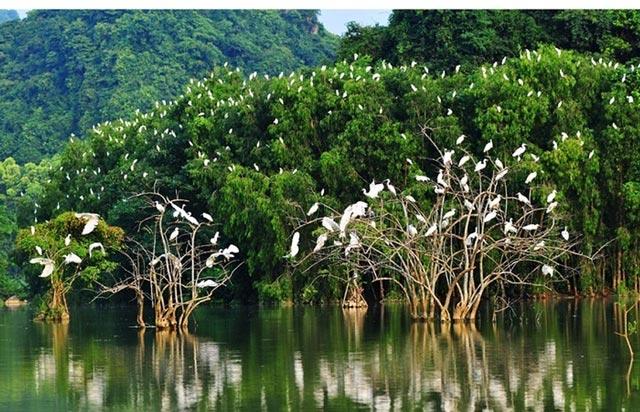Hệ sinh thái nghĩa là gì